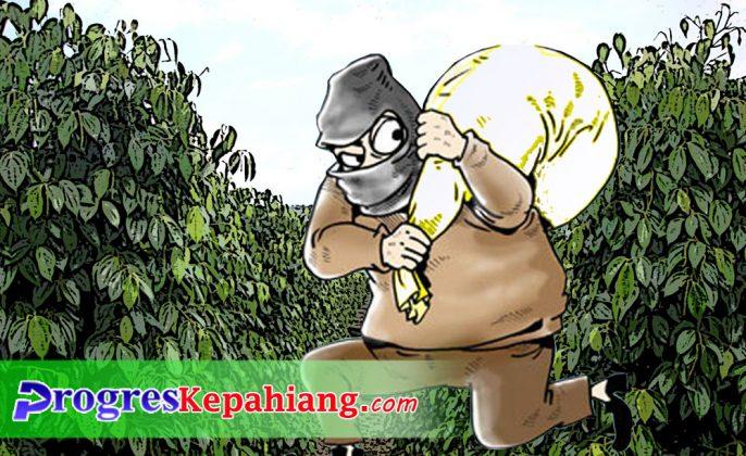Pencurian lada