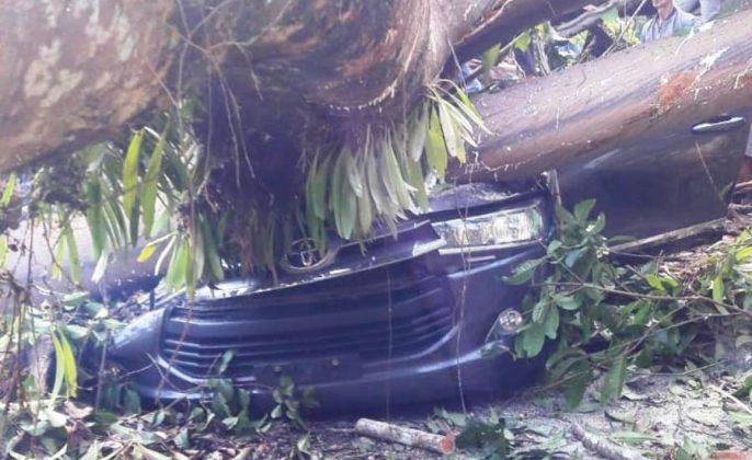 Mobil tertimpa pohon tumbang
